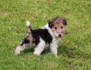 Puppy Potty
