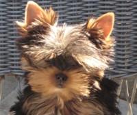 Puppy training Beverly Hills