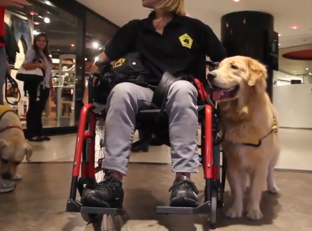 What are the requirements to get a service dog?