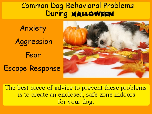 Common Dog Problems during Halloween