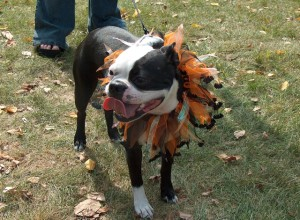 Halloween Dog Tips